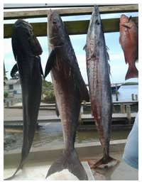 Fish caught with On The Hook Charters in Daytona Beach, Florida
